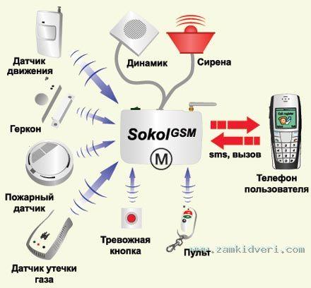 sokol440x408