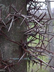шипы и ограда