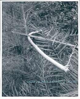 113393509 1966 vietnam cross bow and arrow booby trap press photo